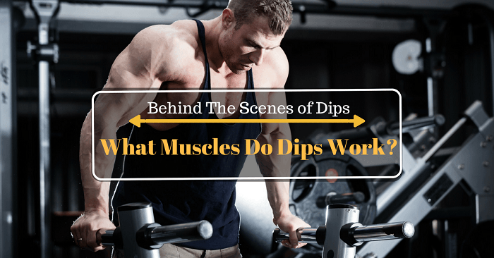 Behind The Scenes of Dips: What Muscles Do Dips Work?